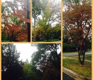 Sept.2015.Fall